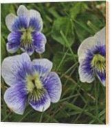 Confederate Violets Wood Print