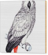 Congo African Grey Parrot Wood Print
