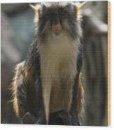 Congo Monkey1 Wood Print