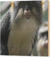 Congo Monkey2 Wood Print