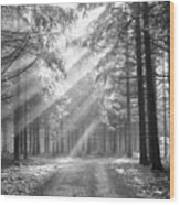 Conifer Forest In Fog Wood Print