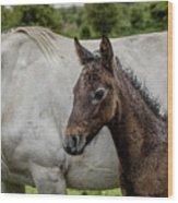 Connemara Foal Wood Print