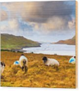Connemara Sheep Grazing Over Killary Fjord Wood Print by Mark E Tisdale