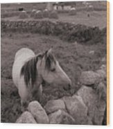 Connemura Horse-signed-#300 Wood Print