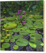 Conservatory Waterlilies Wood Print