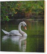 Contemplating Swan Wood Print