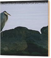 Contemplating Heron Wood Print