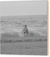 Contemplative Gull Bw Wood Print