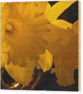 Contemporary Flower Artwork 10 Daffodil Flowers Evening Glow Wood Print