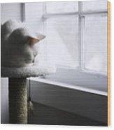 Content Cat Wood Print