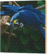 Contorted Parrots Wood Print