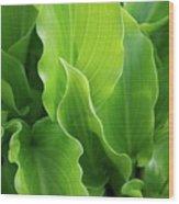 Contoured Leaves Wood Print