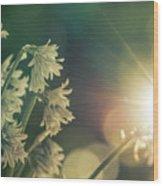 Contra Jour Flowers 1 Wood Print