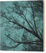 Contrasted Trees Wood Print