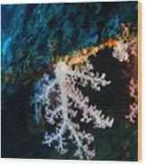 Contrasting Coral Wood Print