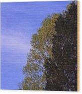 Contrasting Trees Against Sky Wood Print by Randy Muir