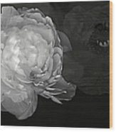Contrasts In Floral Kingdom In Black And White. Wood Print