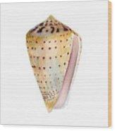 Conus Leopardus Shell Wood Print