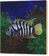 Convict Cichlid Fish Wood Print