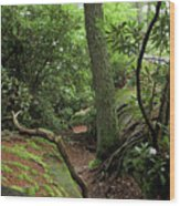 Cook Forest Wood Print