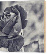 Cool Black Rose Wood Print