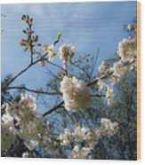Cool Cherry Blossoms Wood Print