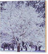 Cool Sunset Essence Of Winter Wood Print