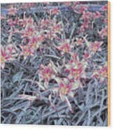 Cool Sunset Field Of Tiger Lillies Wood Print