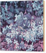 Cool Sunset Jasmine In Bloom Wood Print