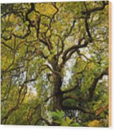 Coole Park Tree Galway Ireland Wood Print