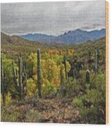 Coon Creek Looking South Wood Print