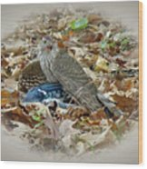Cooper's Hawk - Accipiter Cooperii - With Blue Jay Wood Print