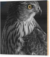Coopers Hawk Bw Wood Print