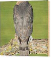 Cooper's Hawk In The Backyard Wood Print