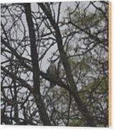 Cooper's Hawk Perched In Tree Wood Print