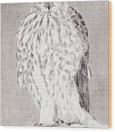 Coopers Hawk Wood Print