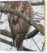 Coopers Hawk Winter Wood Print