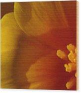 Copa De Oro - Vibrant Wood Print