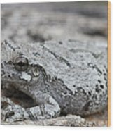 Cope's Gray Tree Frog #5 Wood Print