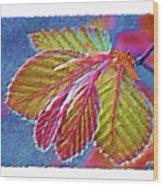Copper Beech Leaves Wood Print