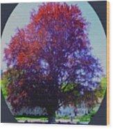 Copper Birch Wood Print