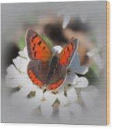 Copper Glow - Butterfly Wood Print