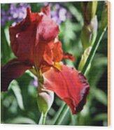 Copper Iris Squared 1 Wood Print