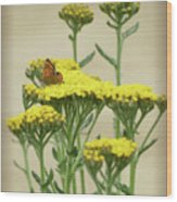 Copper On Yellow - Butterfly - Vignette 2 Wood Print