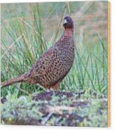 Copper Pheasant Wood Print