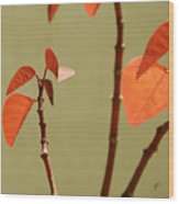 Copper Plant 2 Wood Print