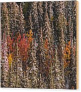 Copse Of Color  Wood Print