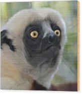 Coquerel's Sifaka Lemur Wood Print