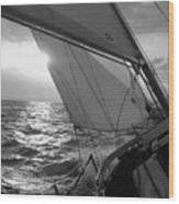 Coquette Sailing Wood Print