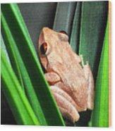 Coqui In Bromeliad Wood Print